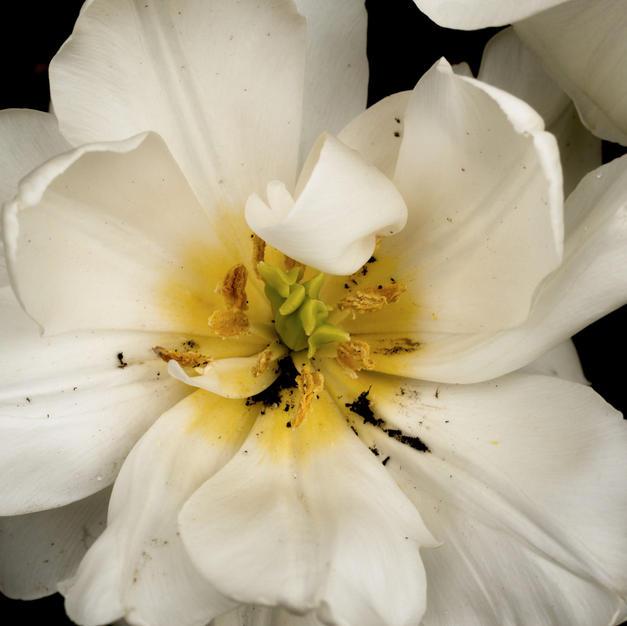 "Springtime Blossom by Leslie Archambault Photograph 12"" x 15"" (framed)"