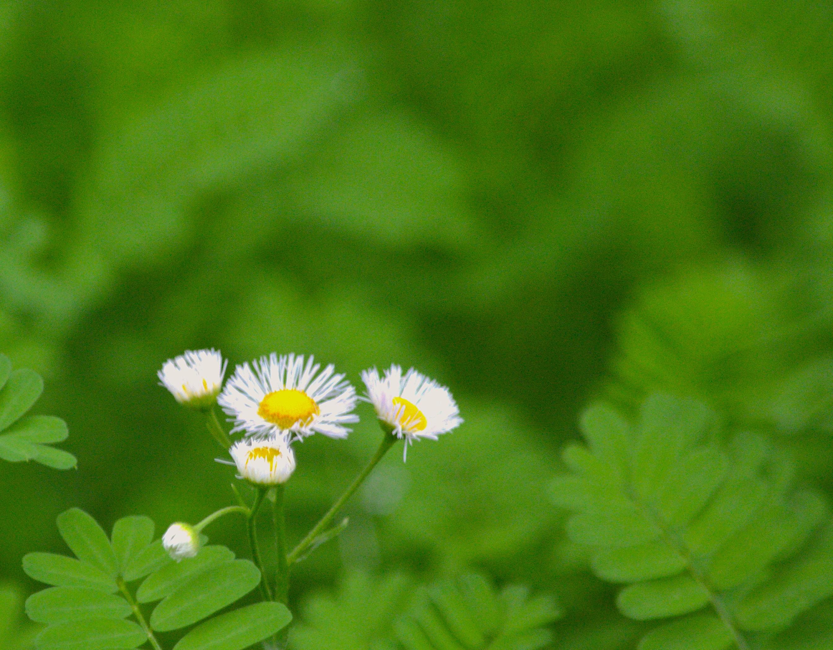 ROB K Wildflower 2