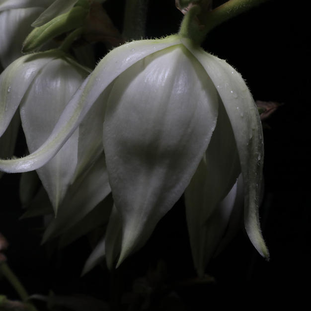 """Yucca by Night by Maribel Perez Photograph 11"""" x 16"""" (matted/framed)"""