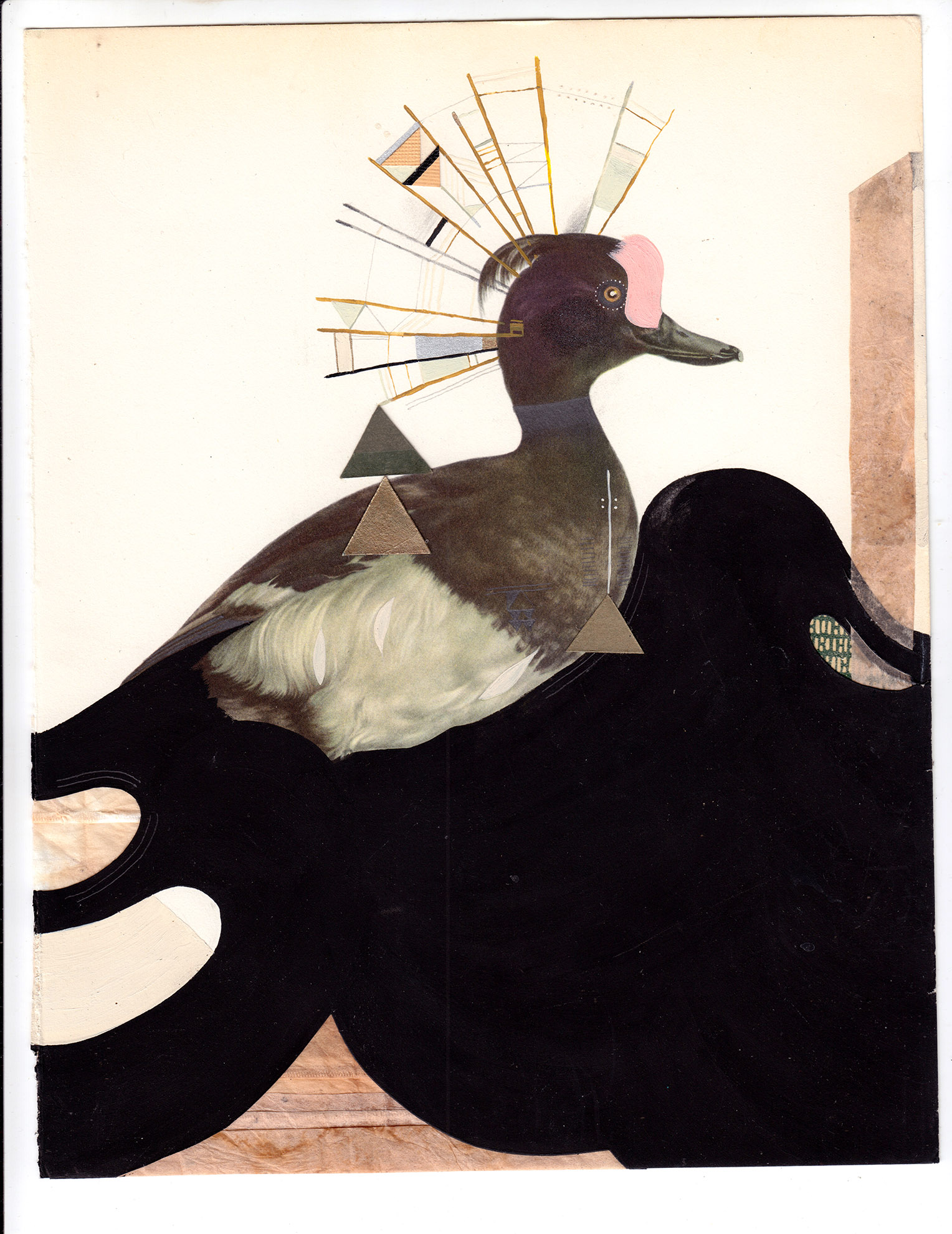 The Tufted Duck