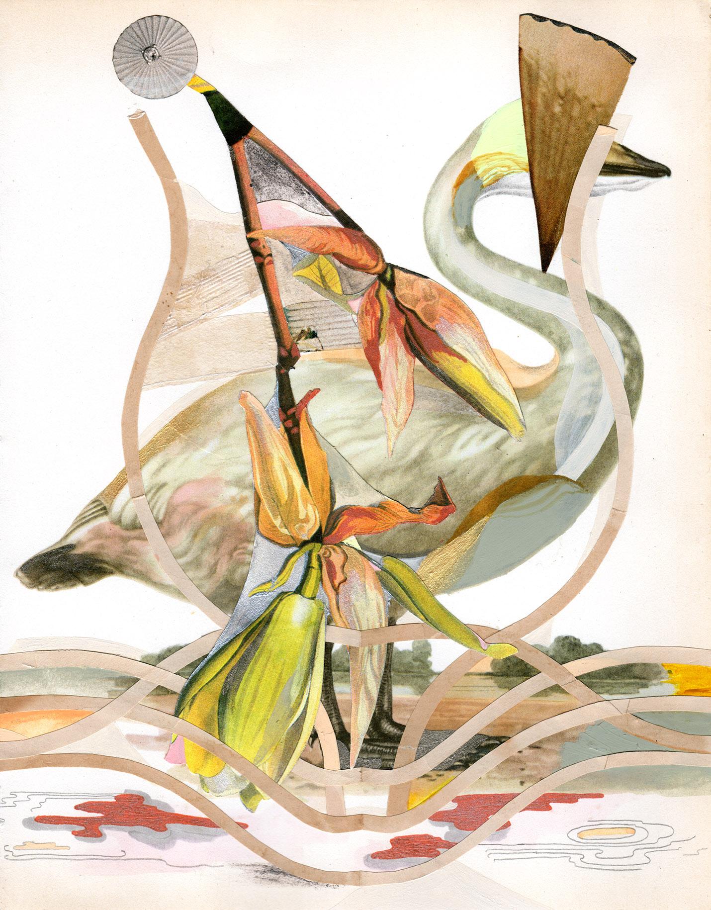 The whooper swan