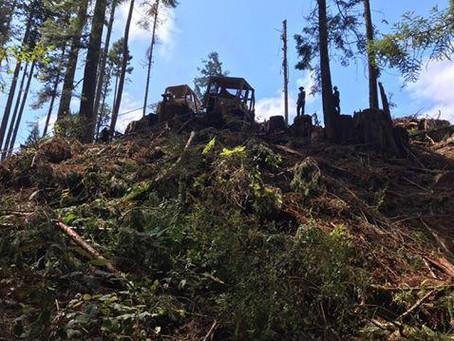 Lords Light Logging & Tree Service