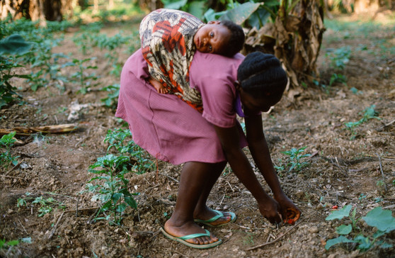 A young girl, with a baby (probably a sibling) tied to her back; she is working on her family's farm.