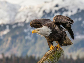 The story of the Eagle and Change Management