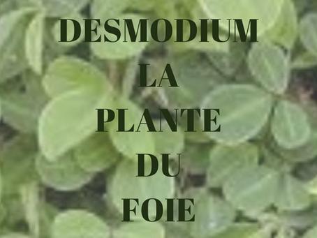 Ma plante chouchoute de la semaine, le Desmodium