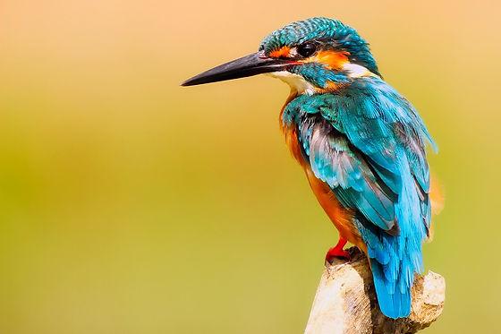 kingfisher-2046453_1920.jpg