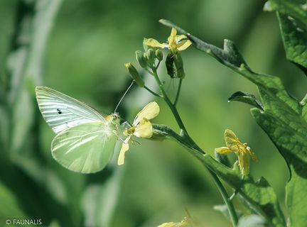Papillons (2).jpg