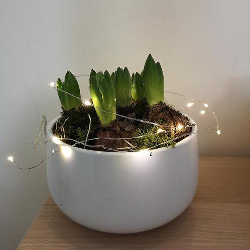 Luxury Hyacinth Planter