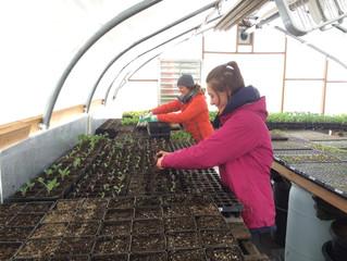 Greenhouse Update