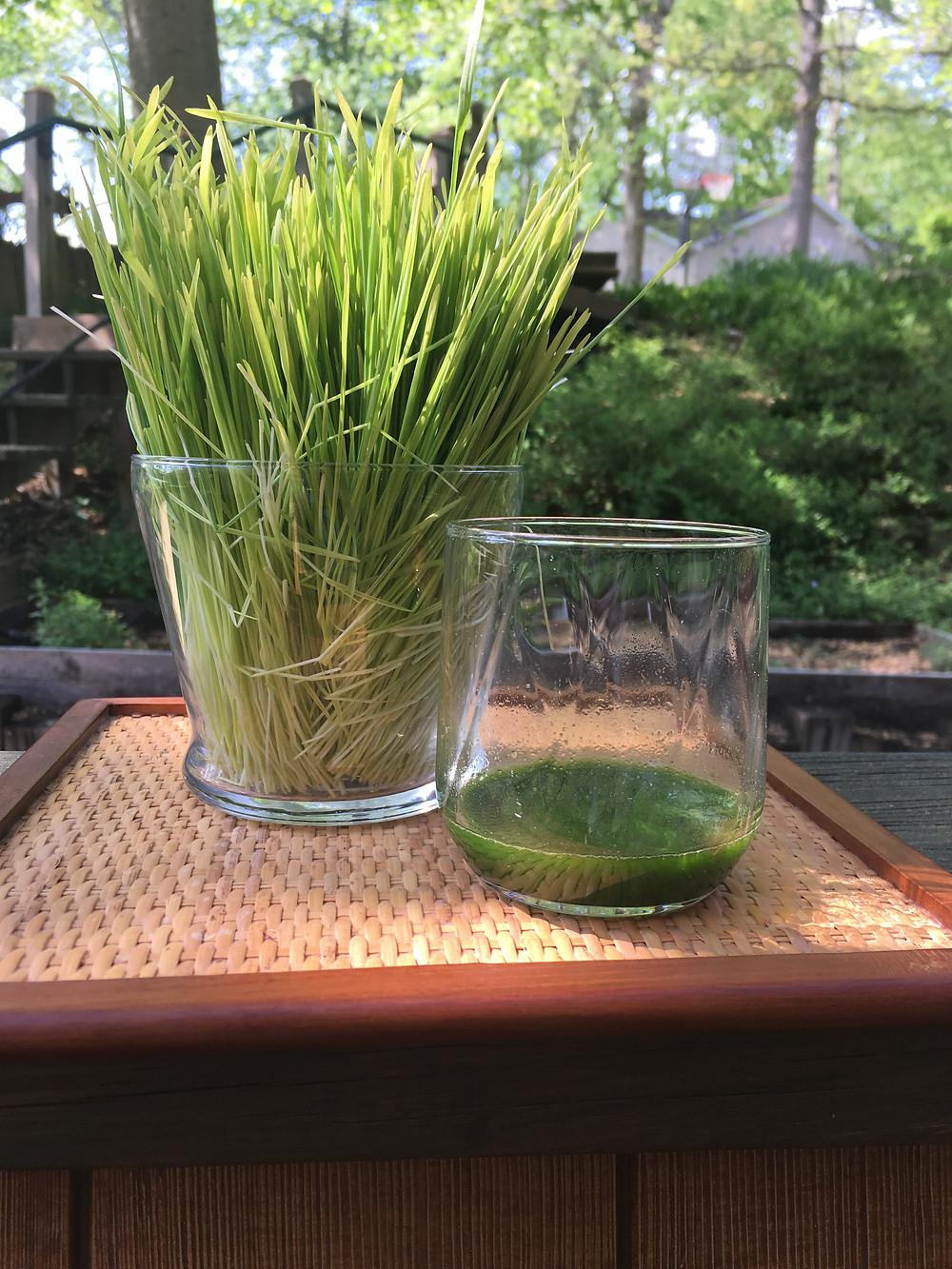 Daily 1 ounce shot of wheatgrass juice