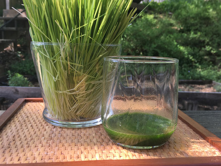 Boost healing qualities with wheatgrass