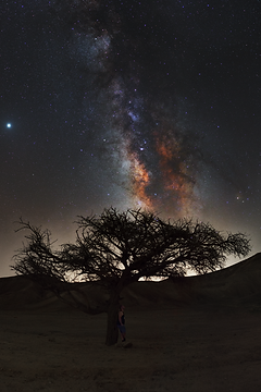 Tree-Pano-S.png