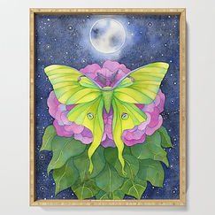 luna-moth-under-the-moon-serving-trays.j