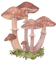 mushroomsbanner.png