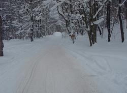 feb 14 snowmobile 024.jpg