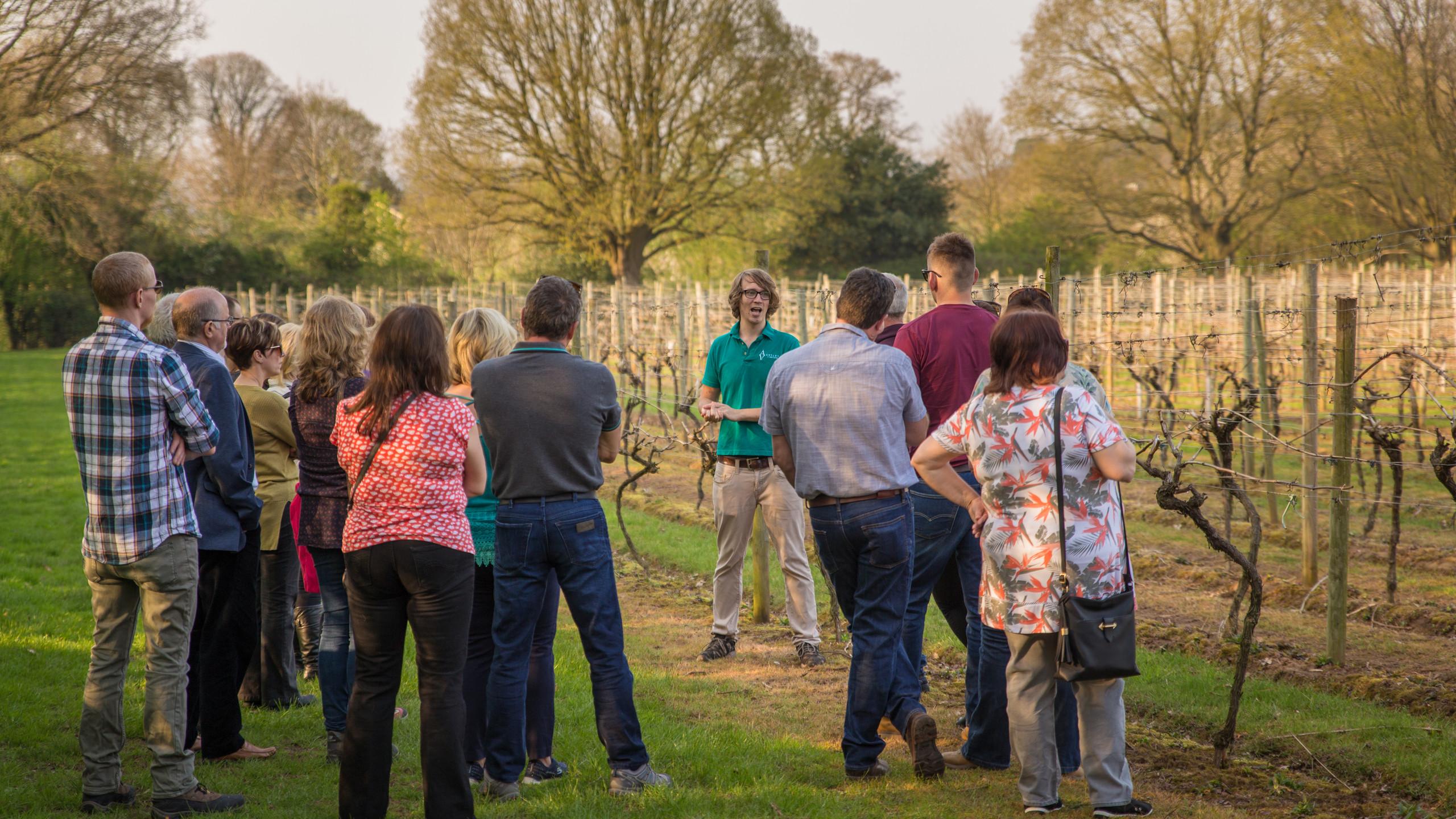 Chris leading a vineyard tour