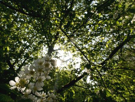 Woodland blog