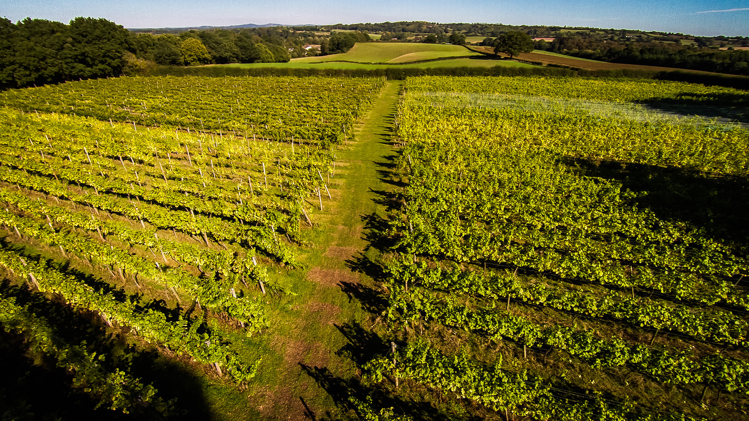 Astley Vineyard from the sky 2018