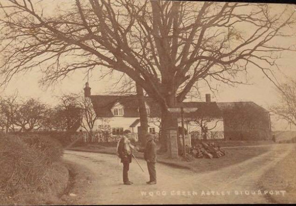 Astley's ancient oak tree