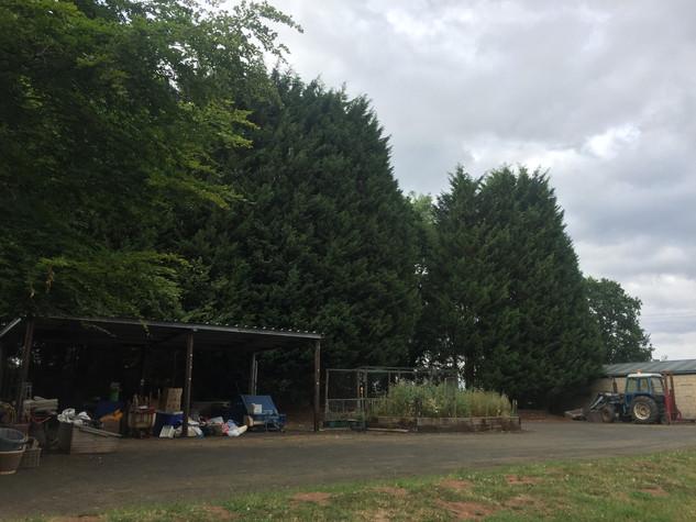A BIT overgrown...
