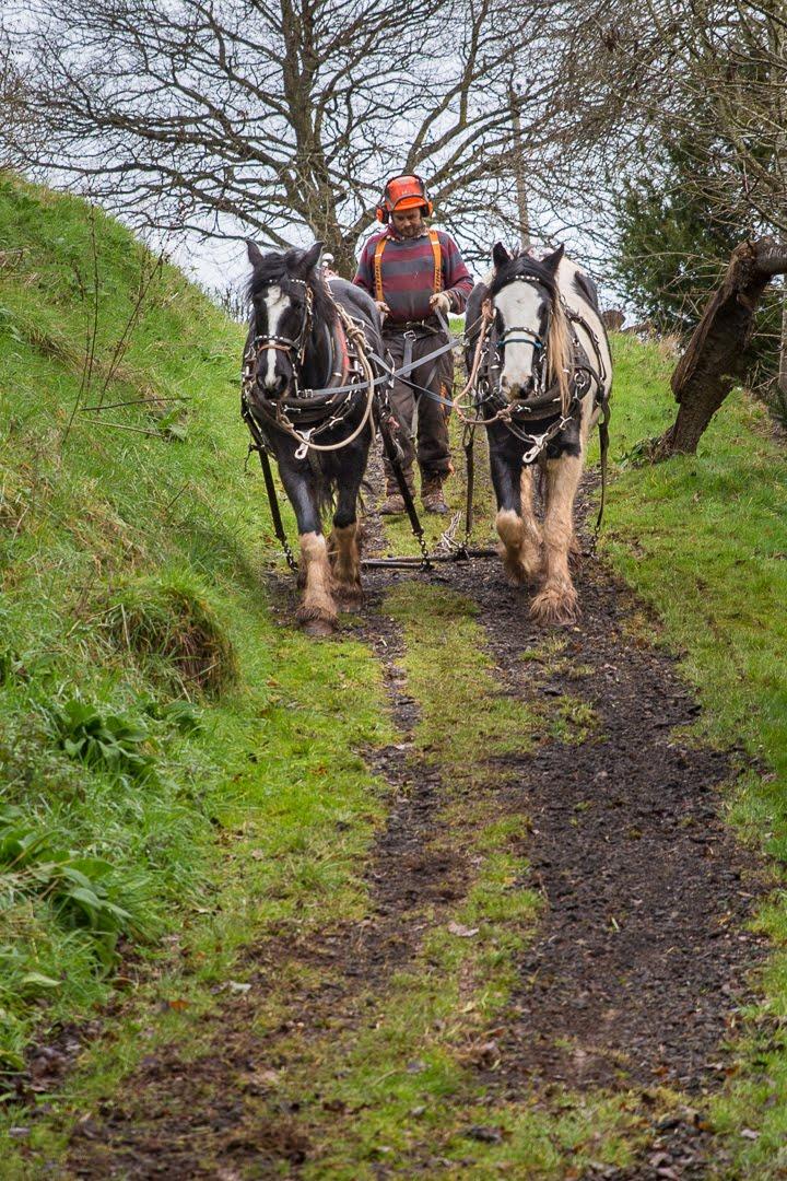 Working horses 2