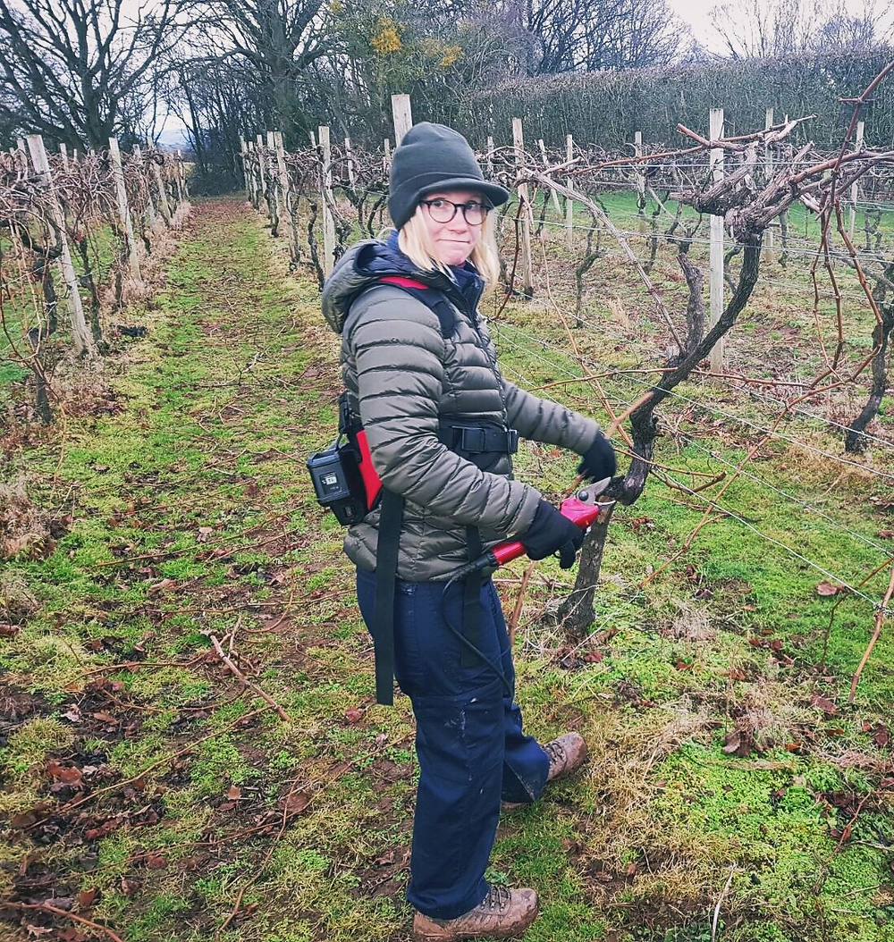Matleena pruning our old vine Kerner