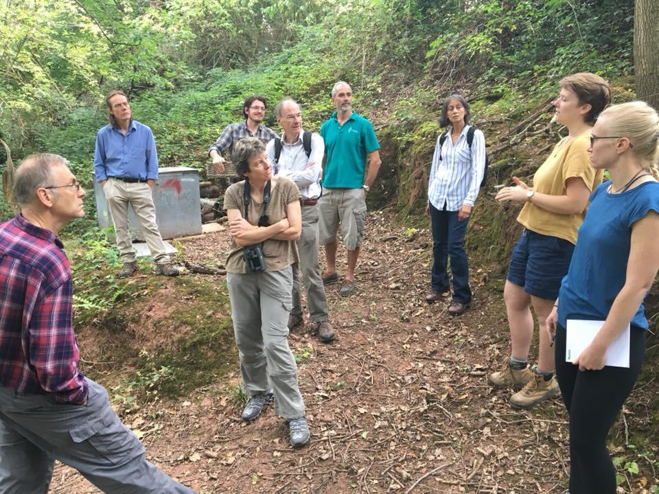 Discussing woodland management