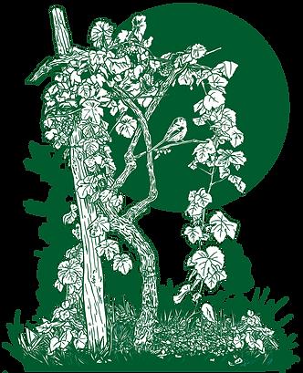 Astley Vineyard illustration