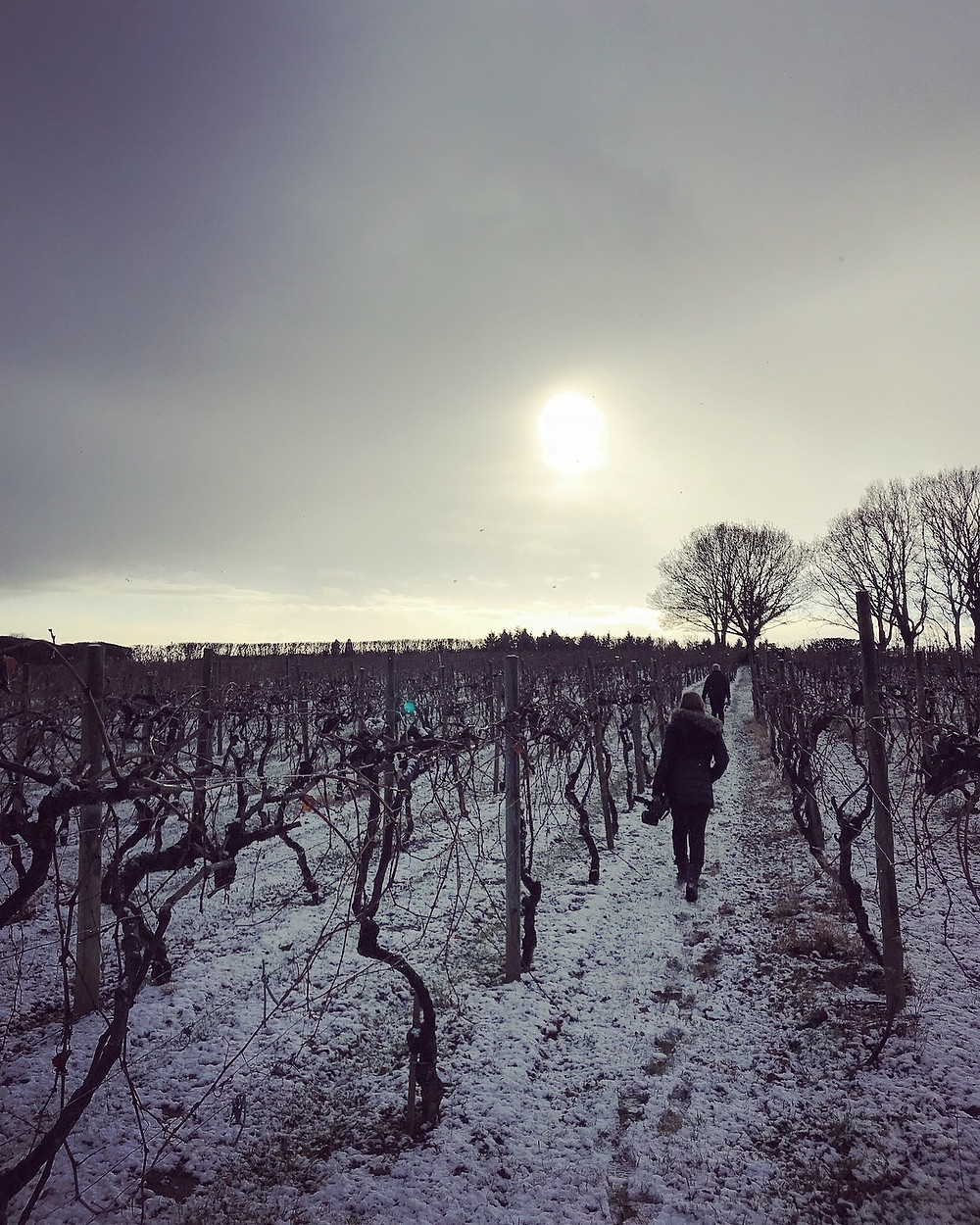 Astley Vineyard in the snow