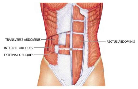 Main Muscles of Abdomonial Wall