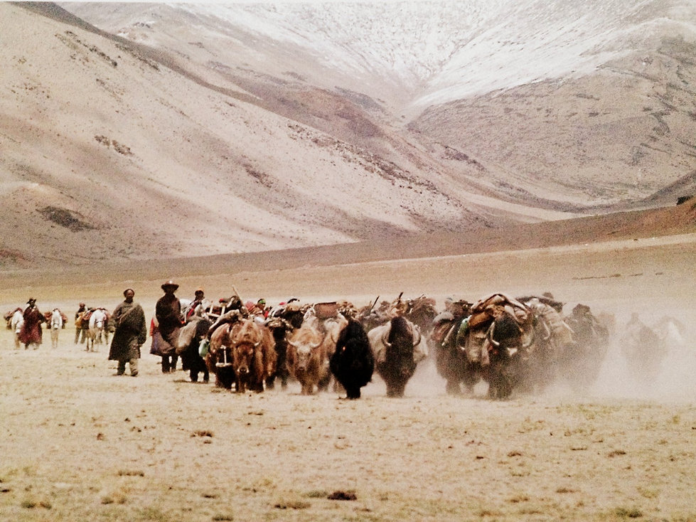 Pashmina-the Kashmir shawl and beyond-00