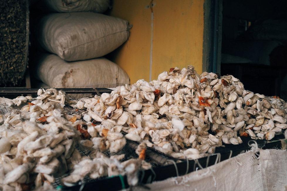 Ahimsa peace vegan silk story-002.JPG