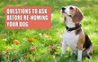 Questions-to-ask-before-rehoming-a-dog.j