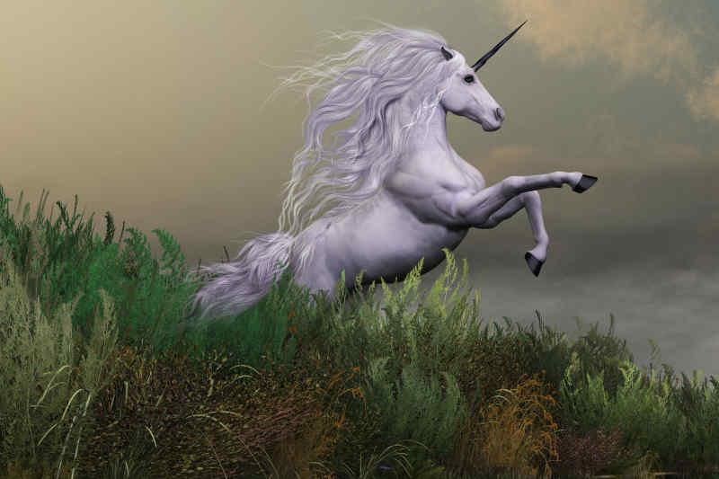 Fun Fact 1 - Unicorn