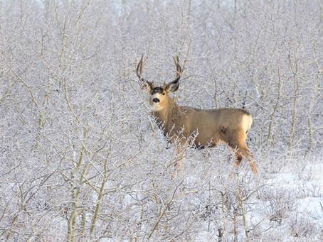 Scotland Wildlife in Winter