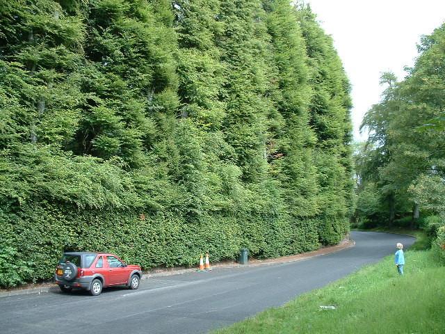Fun Fact 2 - Tallest Hedge