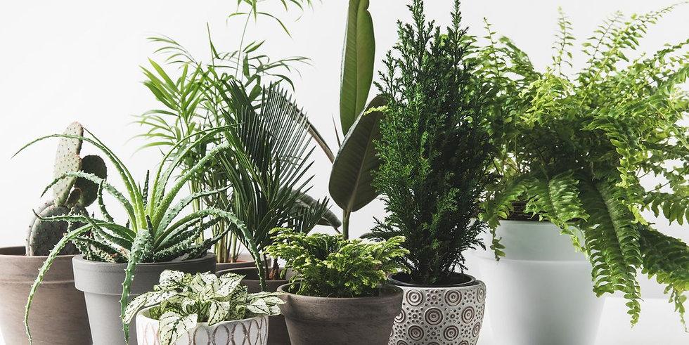 Prickle Emporium - Shop Plants