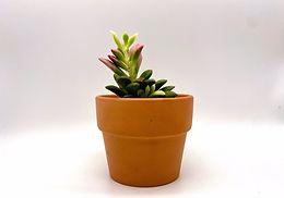 Prickle Emporium - Browse Plants