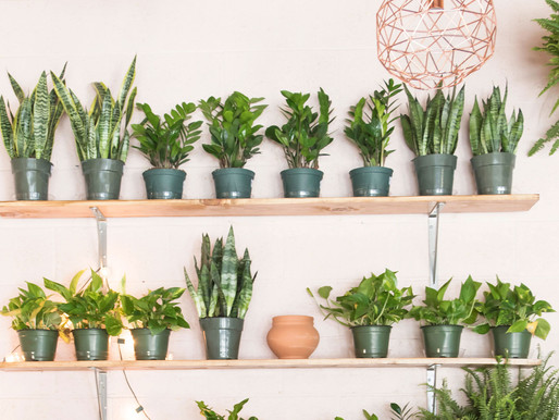 A beginners guide to houseplants
