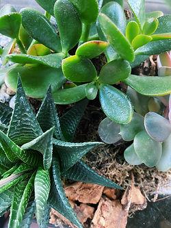 Prickle Emporium Succulents