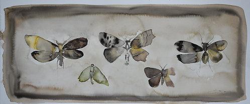 Mutant Moths I