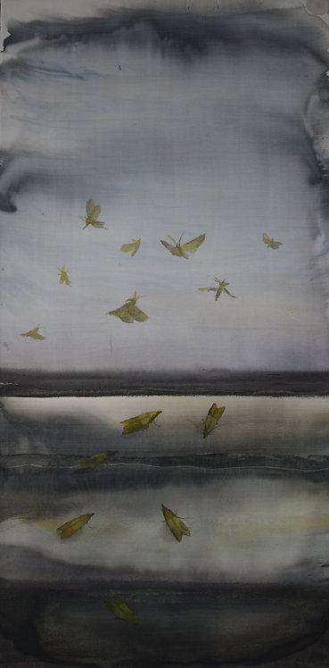 Migrant Moths