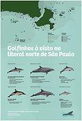 BaleiaAVista_CartazGolfinho_sdata.jpg
