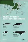 BaleiaAVista_CartazBaleia_sdata.jpg