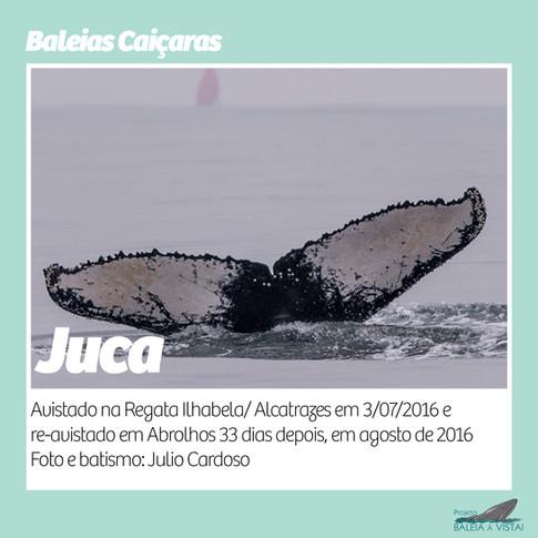 JUCA.jpg