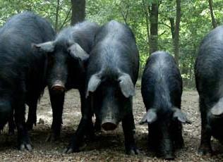 Una specialità gastronomica che delizia il palato: i Salumi di Suino Nero dei Nebrodi