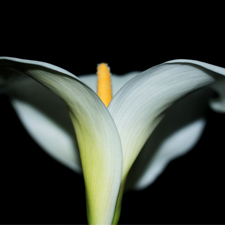 Photo Review - Lily by Jaime Crawford