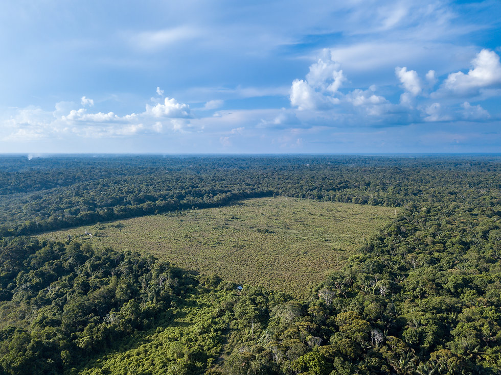 Drone aerial view of deforestation area
