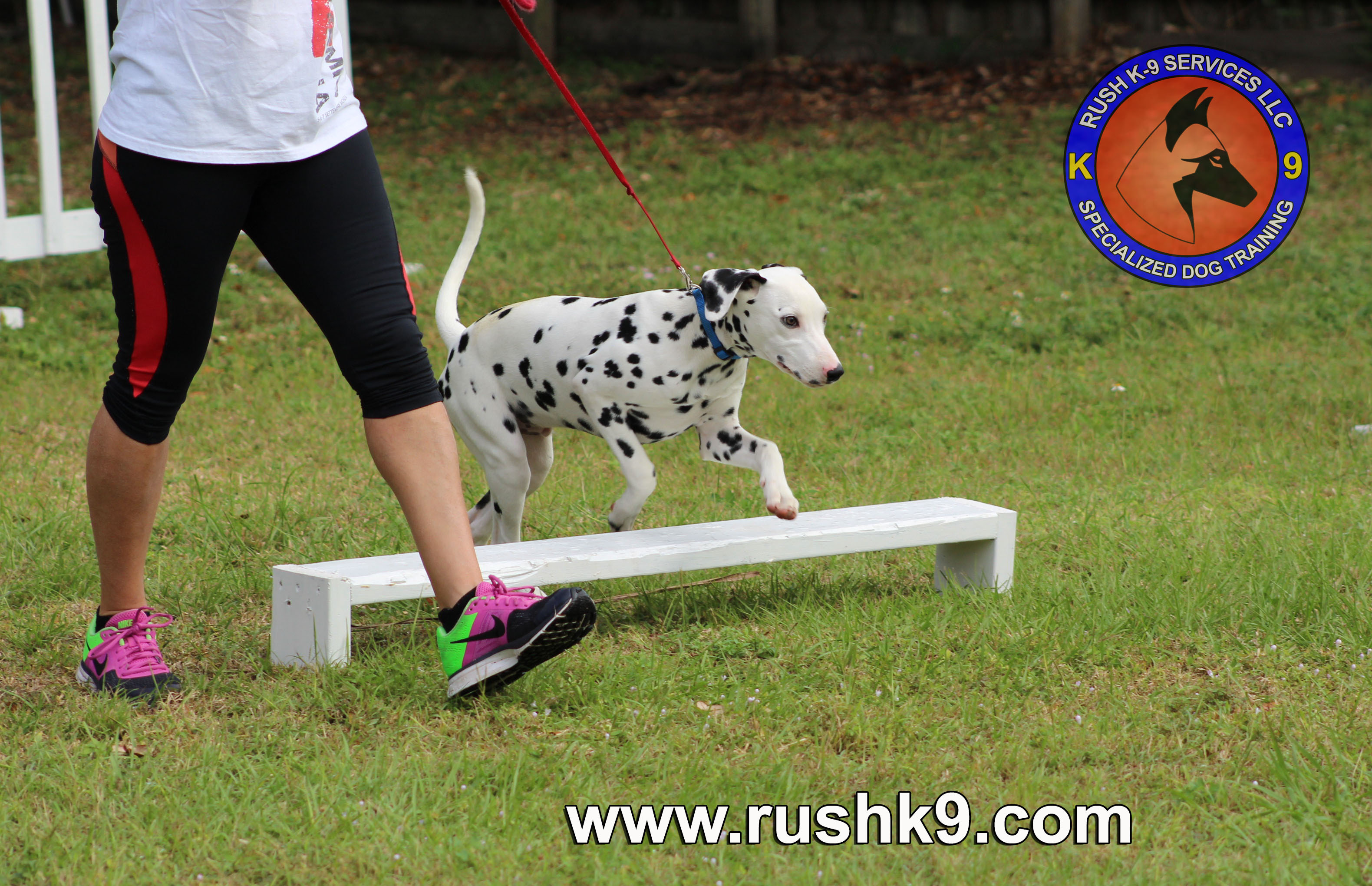 rush k9 services (85)