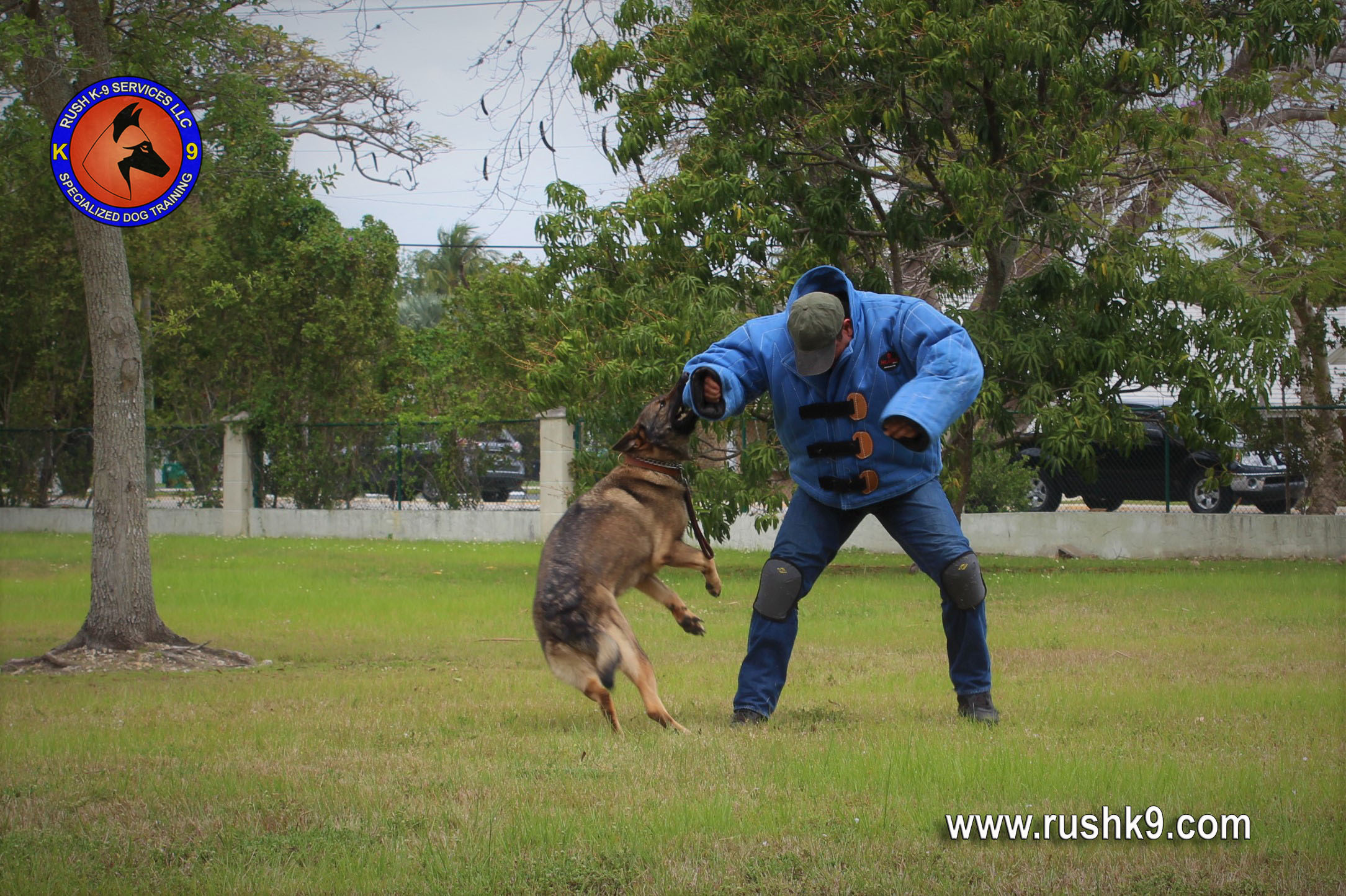 rush k9 services (26)